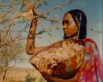 pic of lady harvesting myrrh