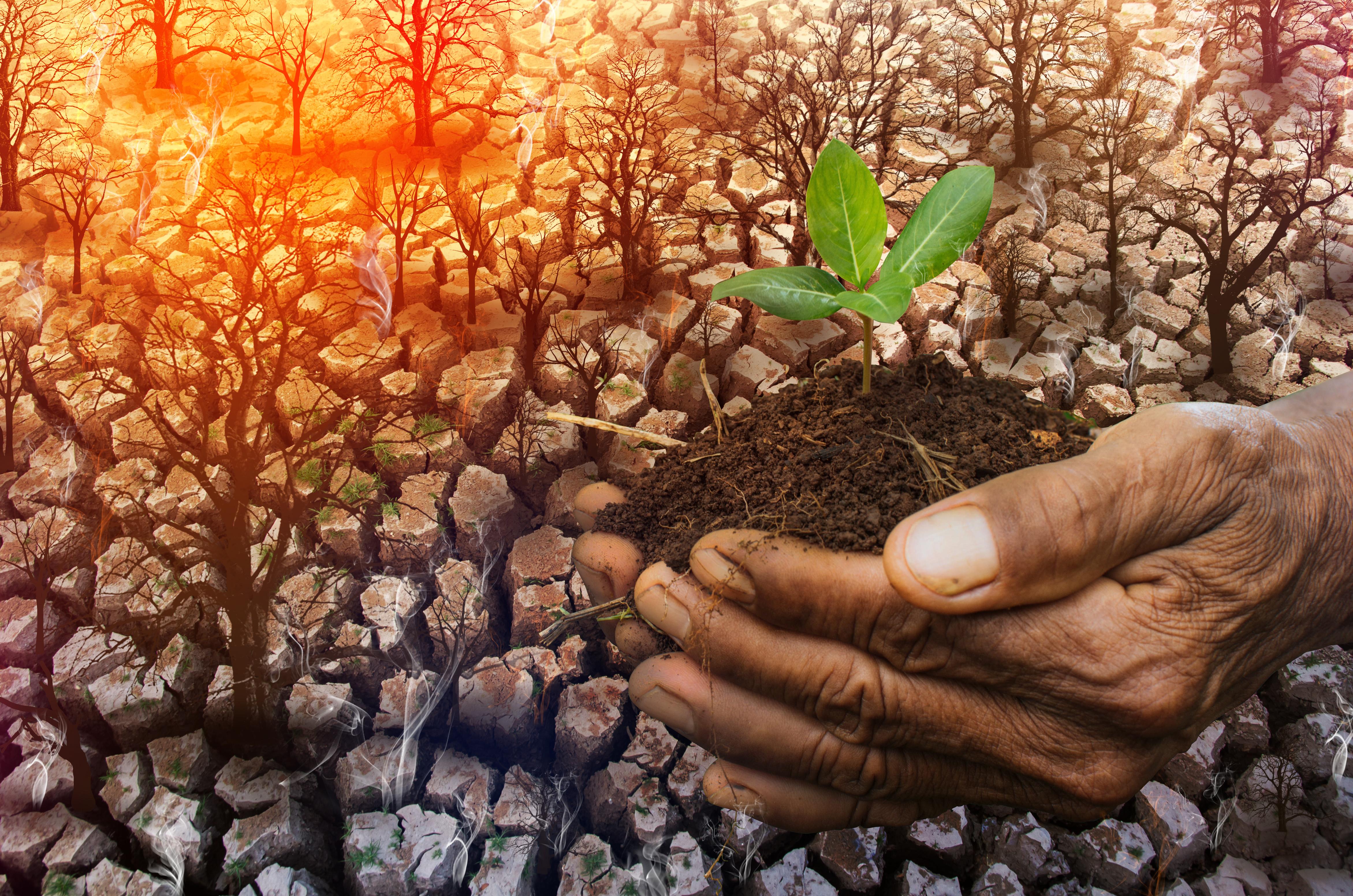plant-life-pic-forgiveness