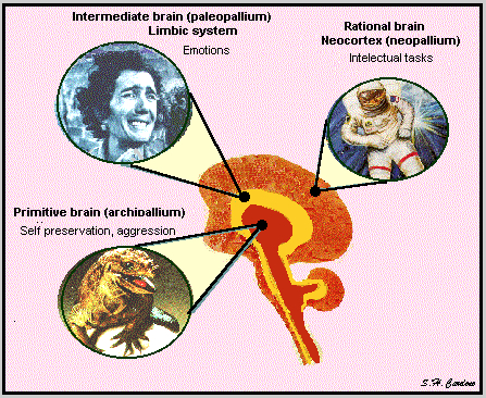 pic of 3 units of brain