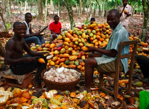 pic of Africans with cacao pods