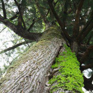 image learn to love cedar