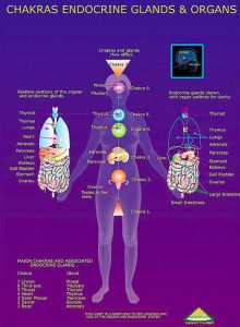 pic of chakrs and body organs
