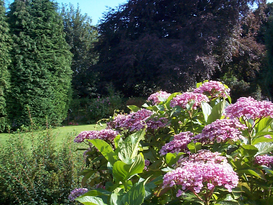 Scenic View of Purple Flowers Growing in a Sunny Tree Filled Garden with Clearing
